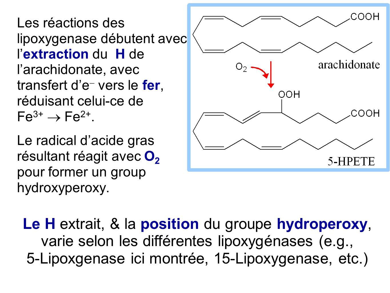 Les réactions des lipoxygenase débutent avec l'extraction du H de l'arachidonate, avec transfert d'e- vers le fer, réduisant celui-ce de Fe3+  Fe2+.