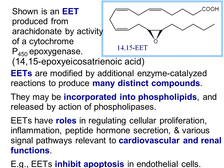 (14,15-epoxyeicosatrienoic acid)