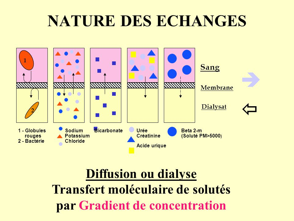 Transfert moléculaire de solutés par Gradient de concentration