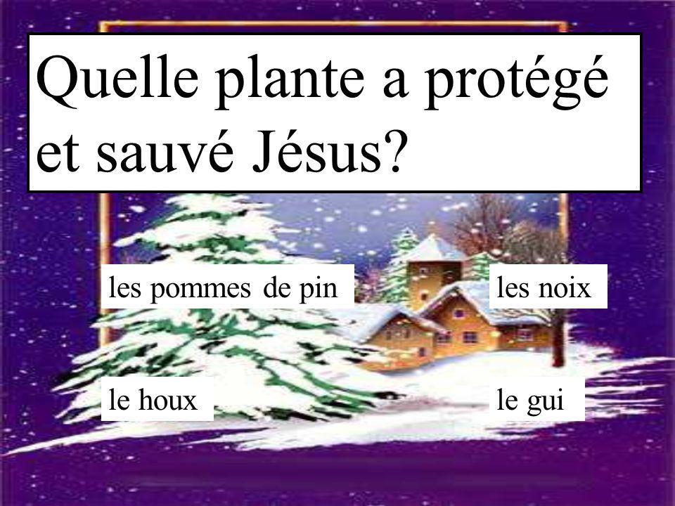 Quelle plante a protégé et sauvé Jésus