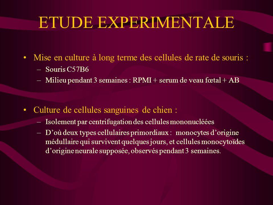 ETUDE EXPERIMENTALE Mise en culture à long terme des cellules de rate de souris : Souris C57B6.