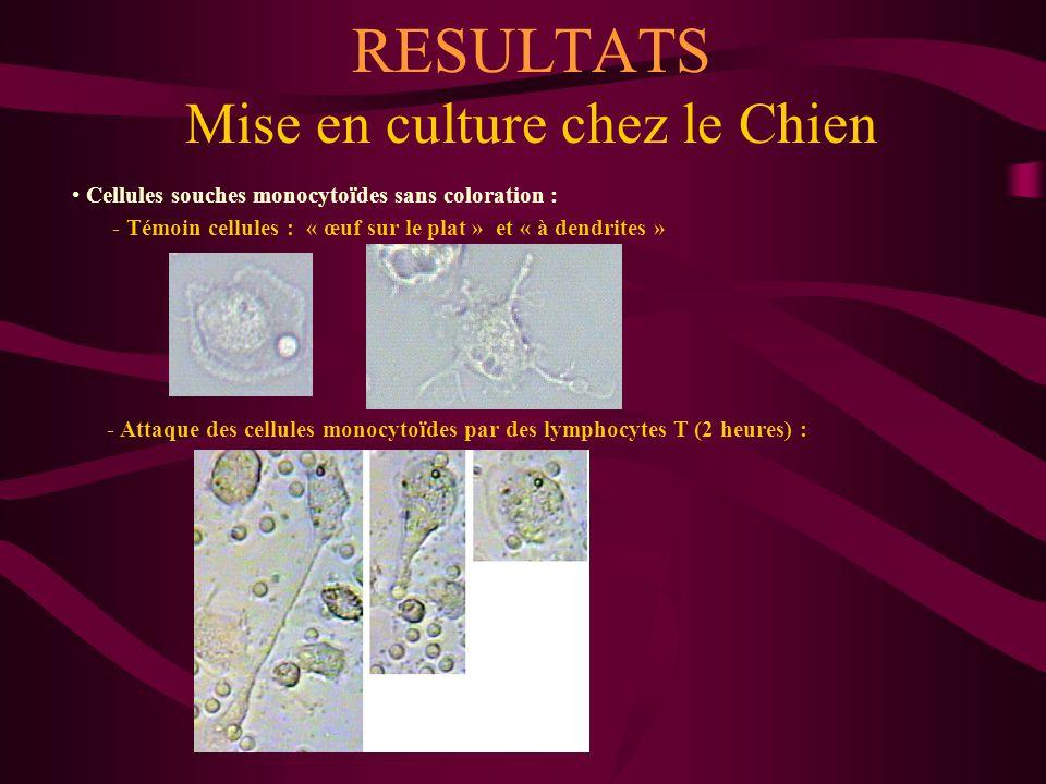 RESULTATS Mise en culture chez le Chien