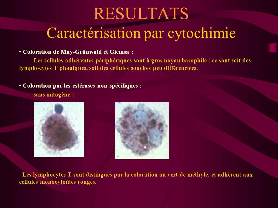 RESULTATS Caractérisation par cytochimie