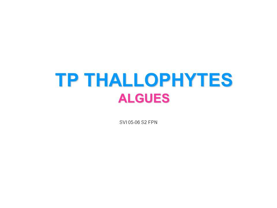TP THALLOPHYTES ALGUES