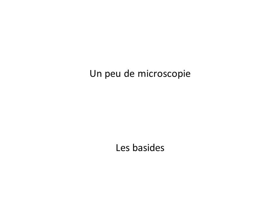 1 Un peu de microscopie Les basides