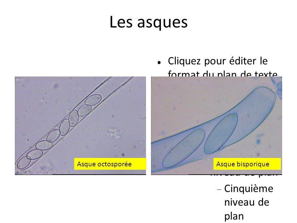 2222 Les asques Asque octosporée Asque bisporique