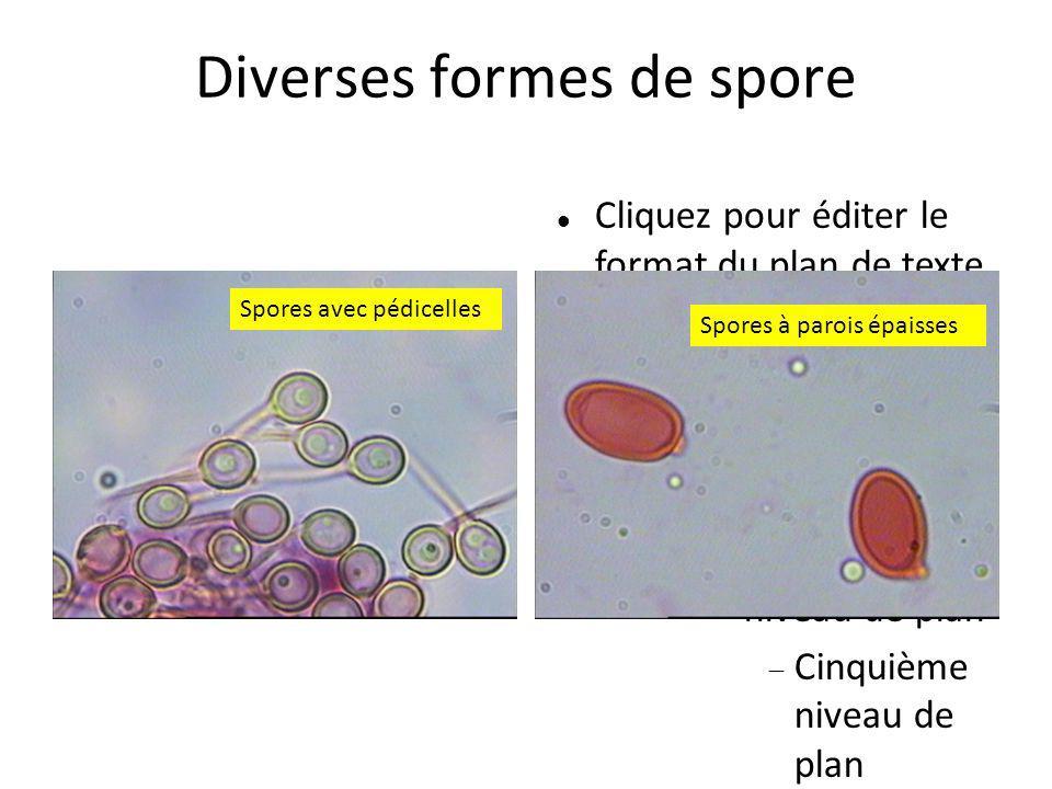 Diverses formes de spore