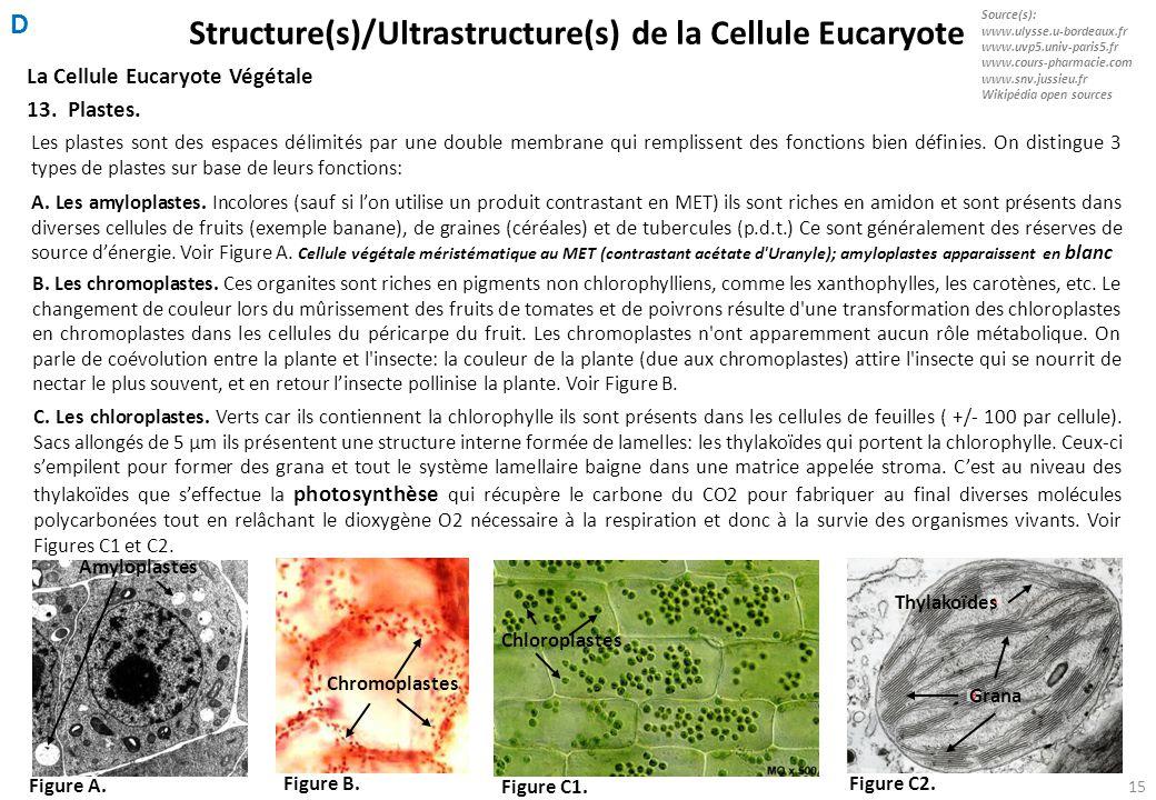 Structure(s)/Ultrastructure(s) de la Cellule Eucaryote
