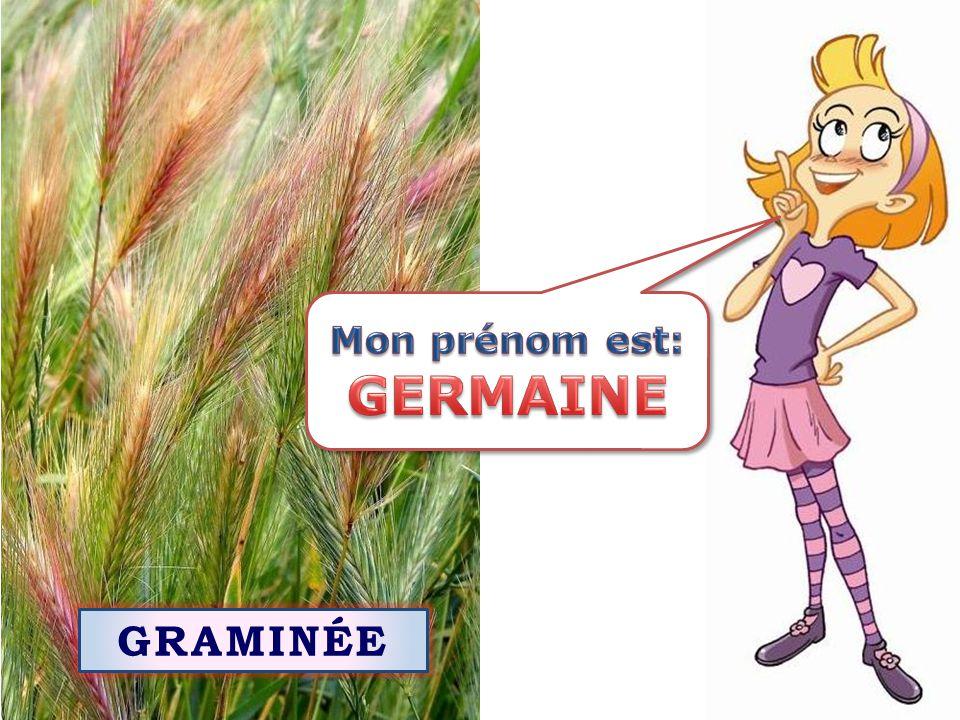 Mon prénom est: GERMAINE GRAMINÉE