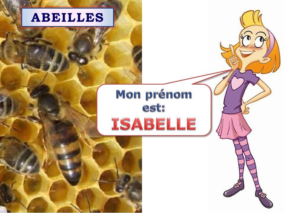 ABEILLES Mon prénom est: ISABELLE