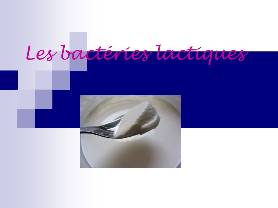 Les bactéries lactiques