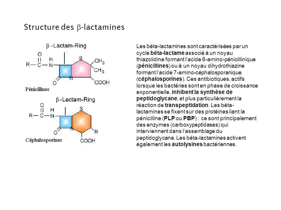 Structure des b-lactamines
