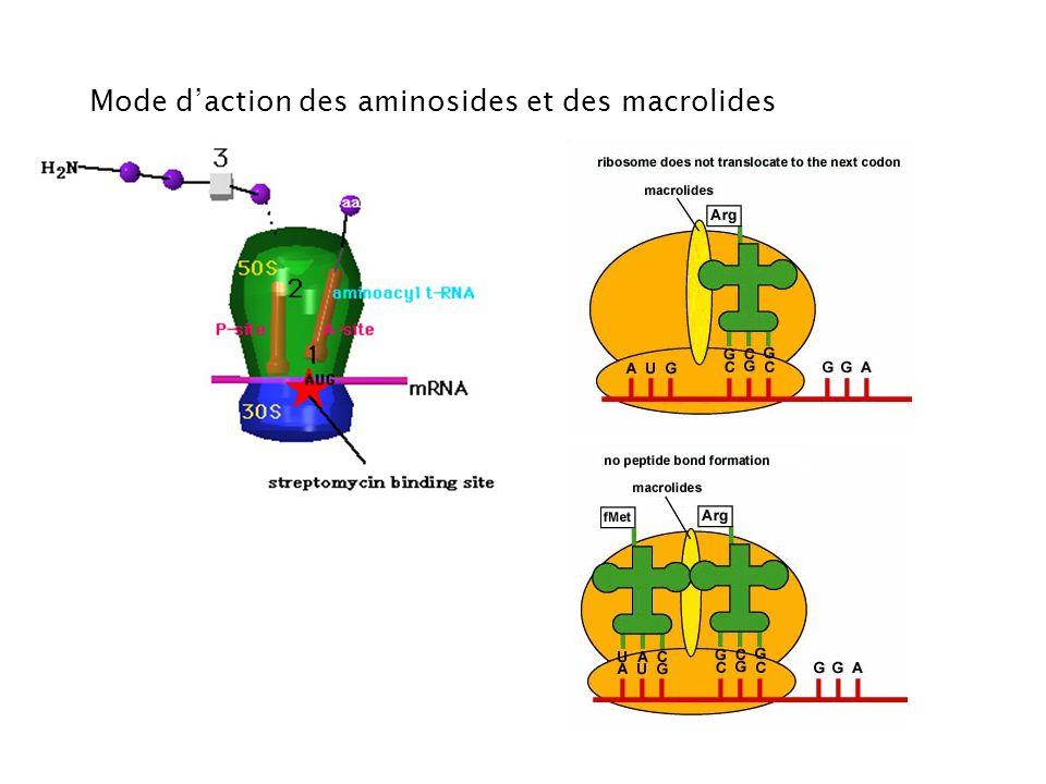 Mode d'action des aminosides et des macrolides