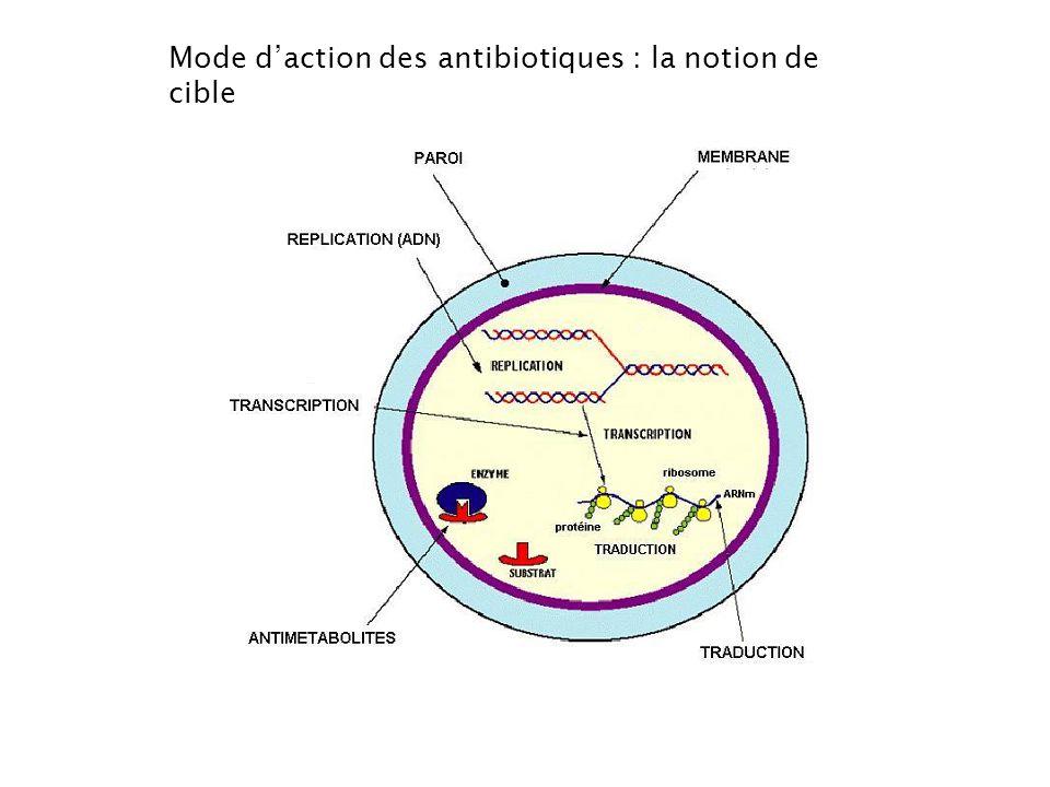 Mode d'action des antibiotiques : la notion de cible