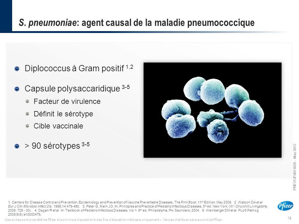 S. pneumoniae: agent causal de la maladie pneumococcique