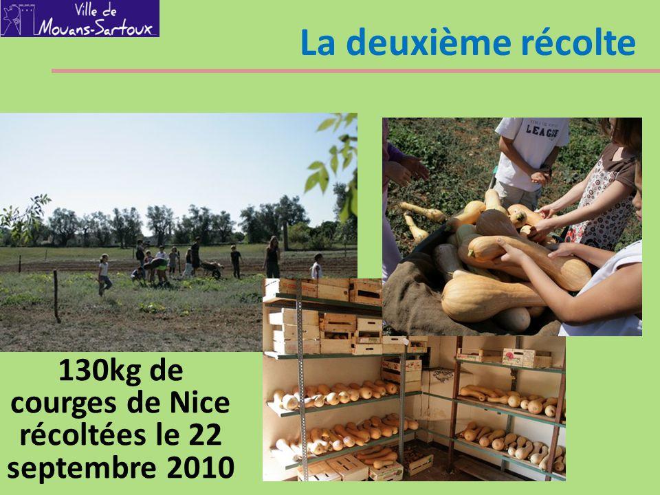 130kg de courges de Nice récoltées le 22 septembre 2010
