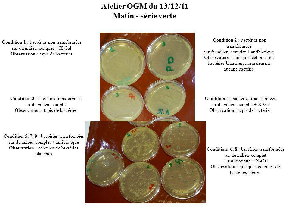 Atelier OGM du 13/12/11 Matin - série verte