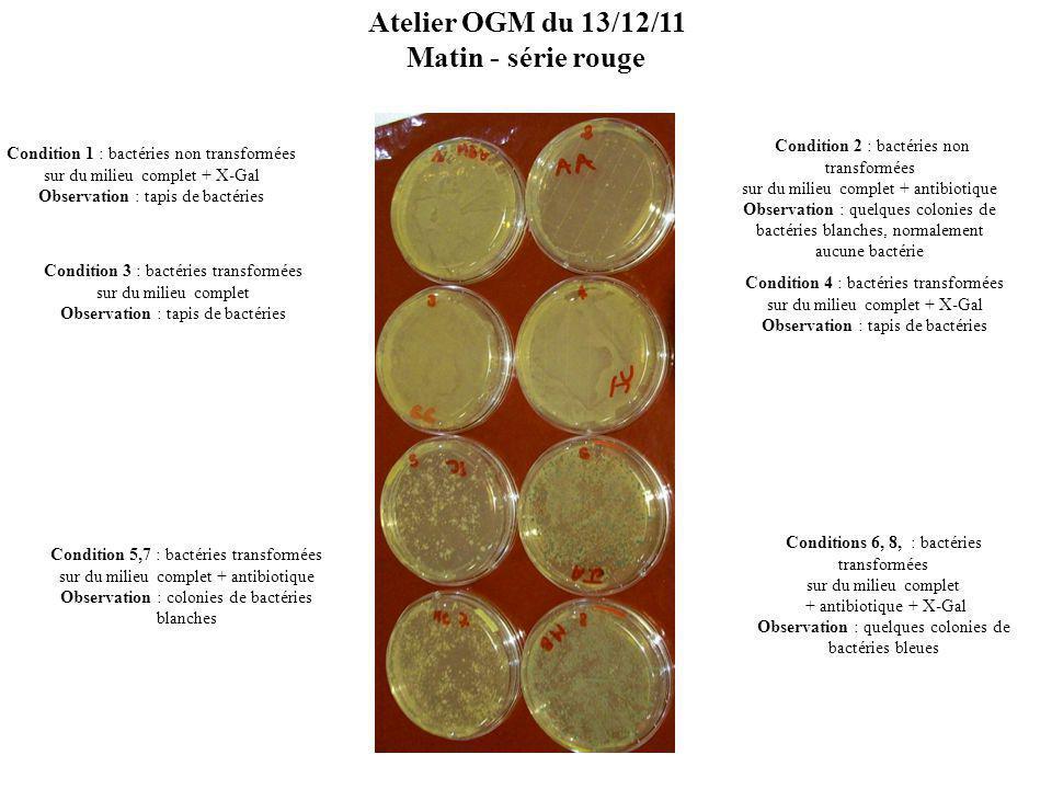 Atelier OGM du 13/12/11 Matin - série rouge