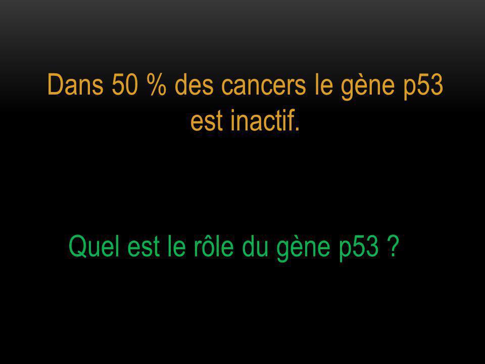 Dans 50 % des cancers le gène p53 est inactif.