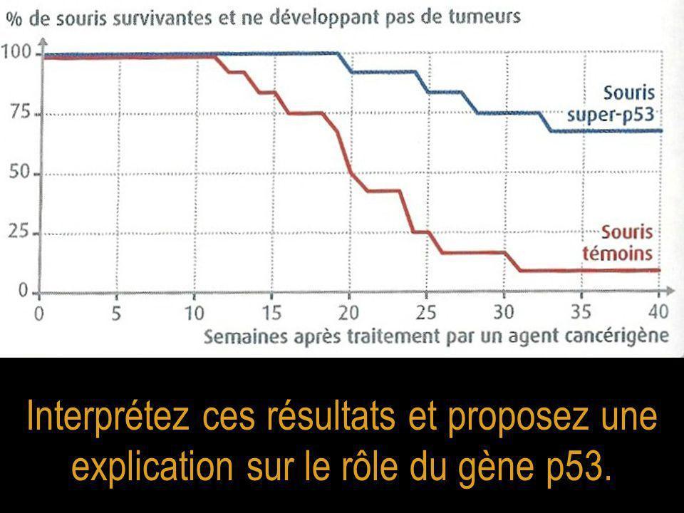 Interprétez ces résultats et proposez une explication sur le rôle du gène p53.
