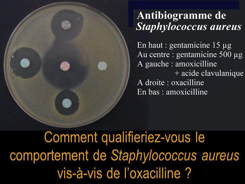 Comment qualifieriez-vous le comportement de Staphylococcus aureus vis-à-vis de l'oxacilline