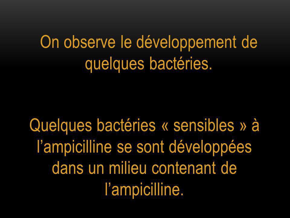 On observe le développement de quelques bactéries.