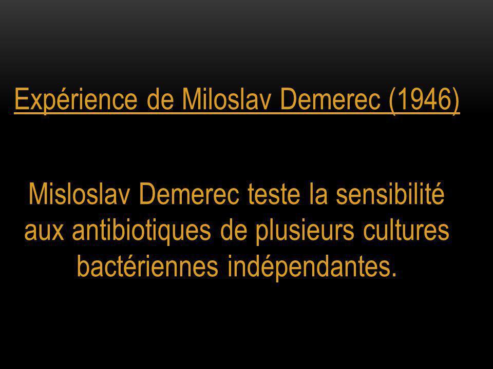 Expérience de Miloslav Demerec (1946)