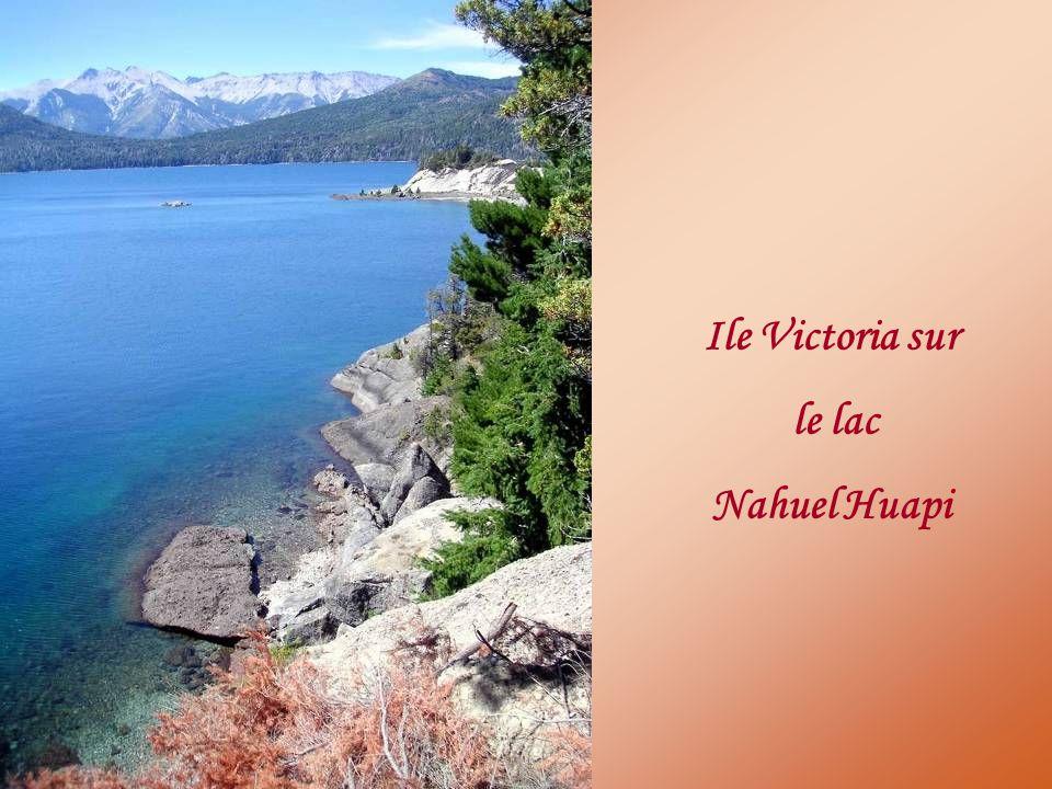 Ile Victoria sur le lac Nahuel Huapi