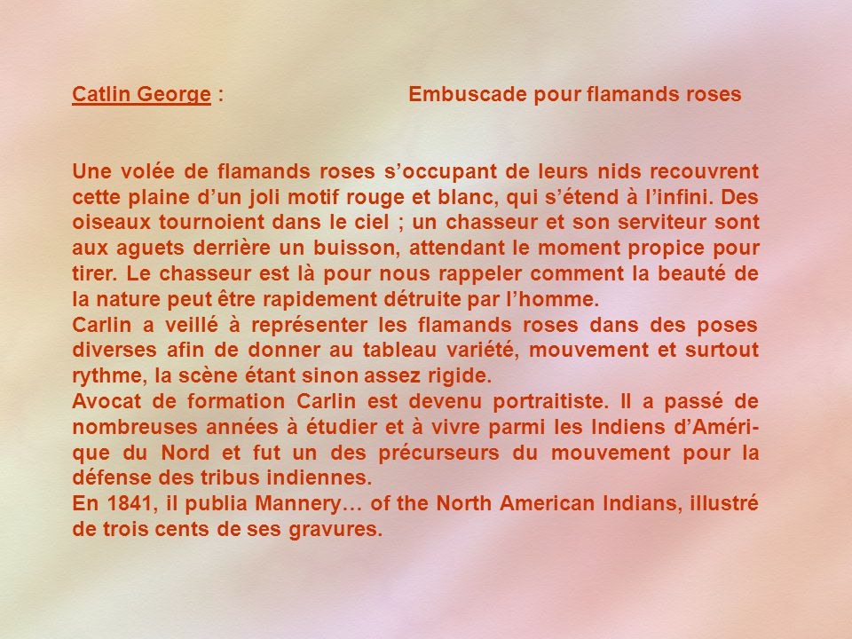 Catlin George : Embuscade pour flamands roses
