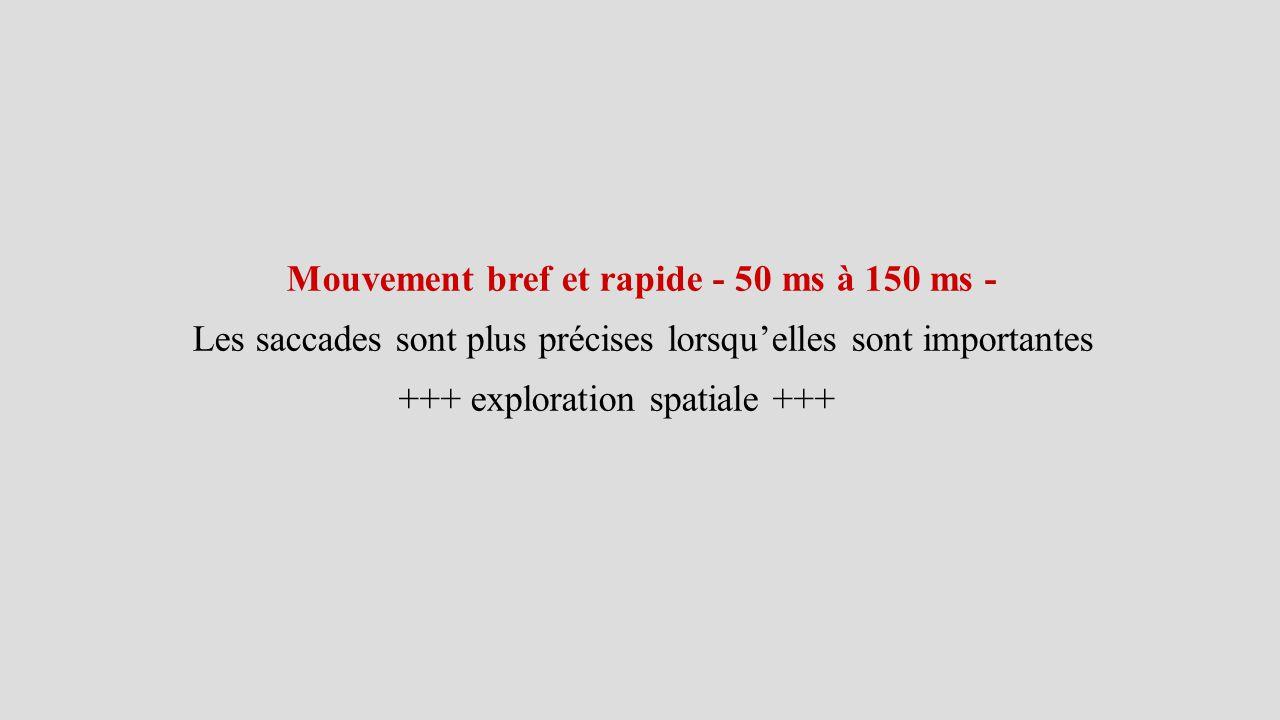 Mouvement bref et rapide - 50 ms à 150 ms -