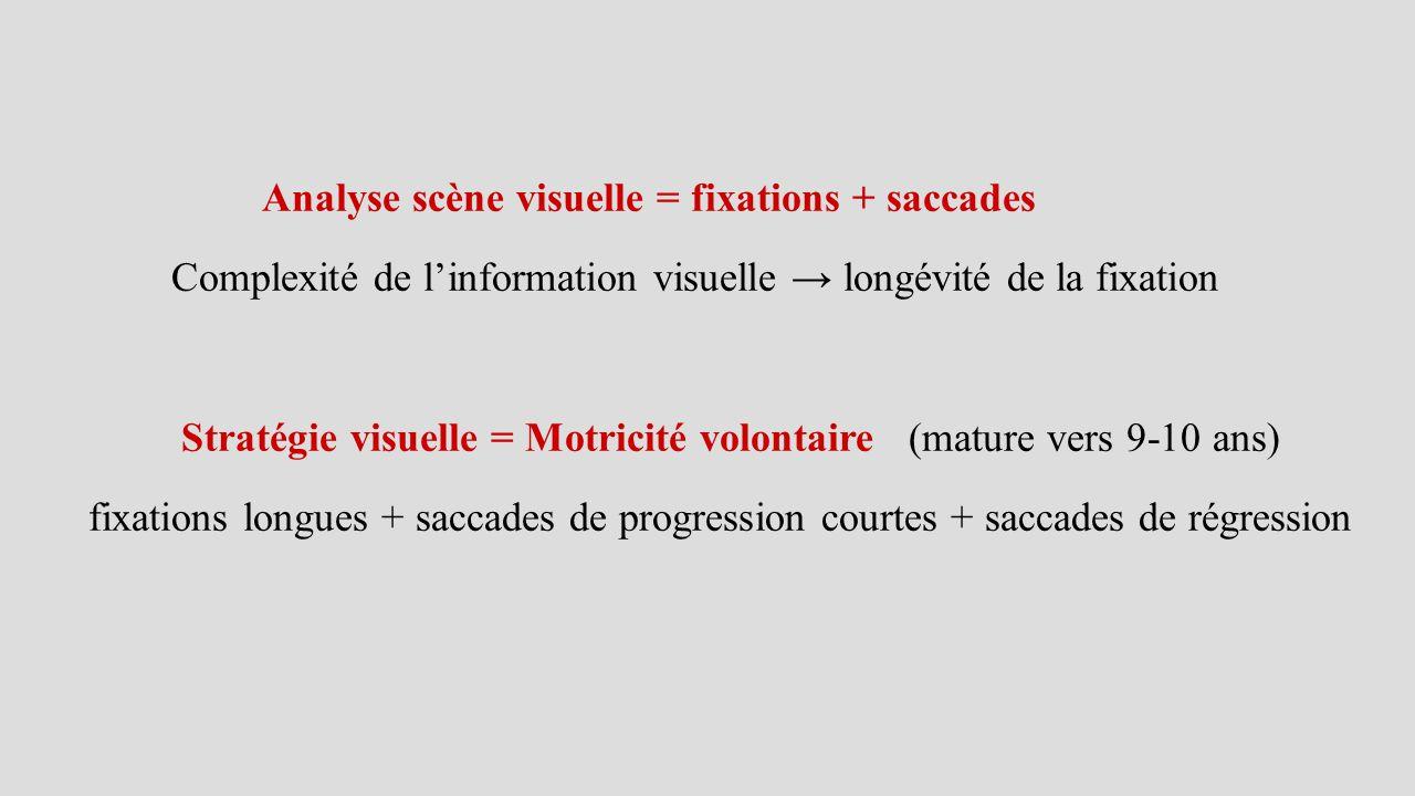 Analyse scène visuelle = fixations + saccades