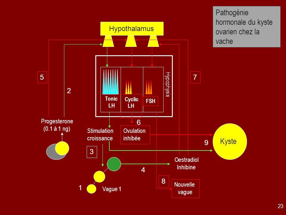 Pathogénie hormonale du kyste ovarien chez la vache