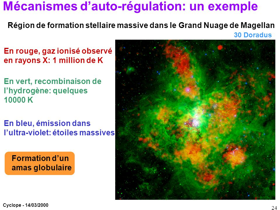 Mécanismes d'auto-régulation: un exemple