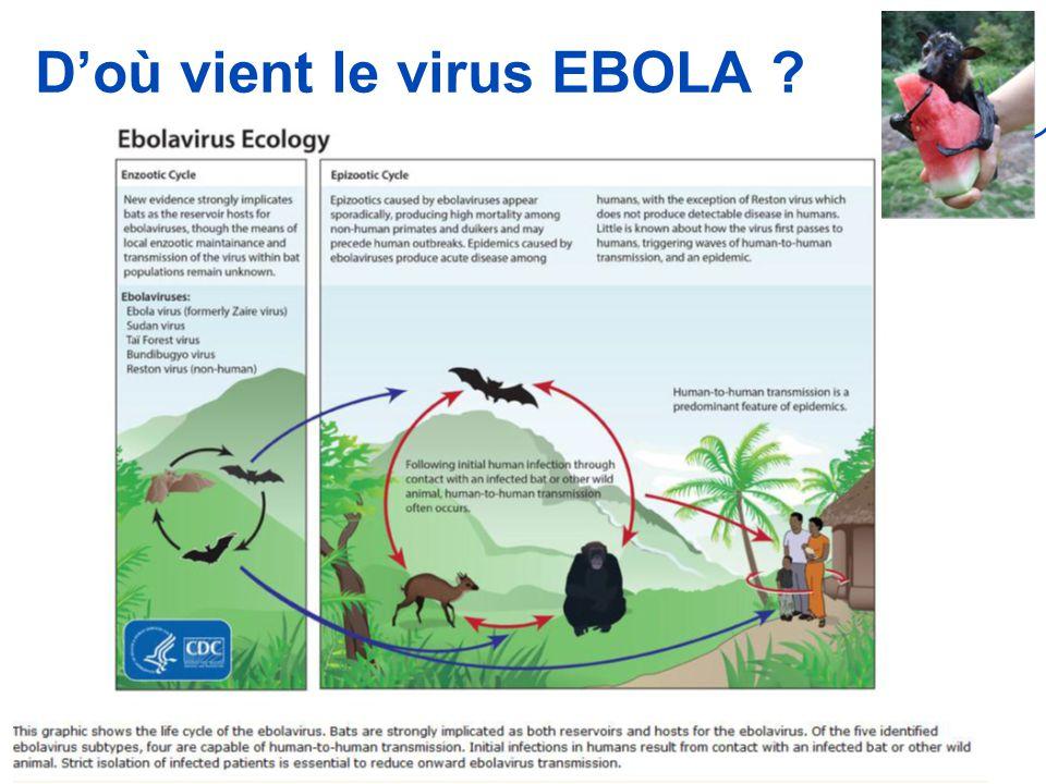 D'où vient le virus EBOLA