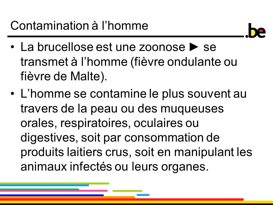 Contamination à l'homme