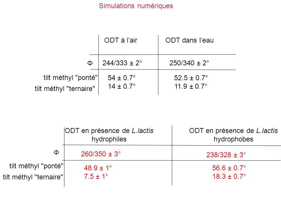ODT en présence de L.lactis