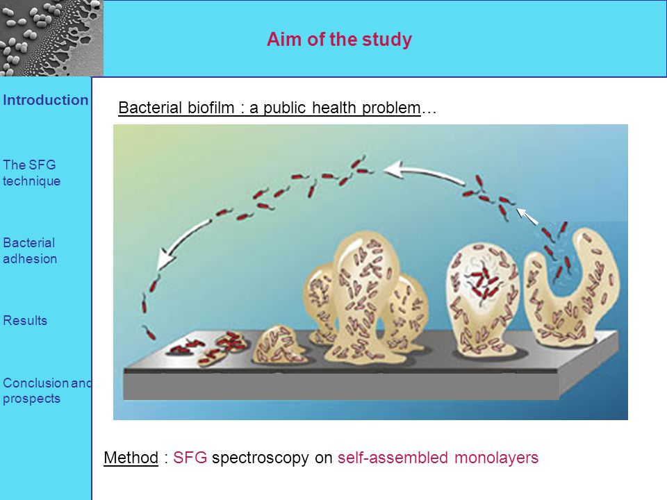 Aim of the study Bacterial biofilm : a public health problem…