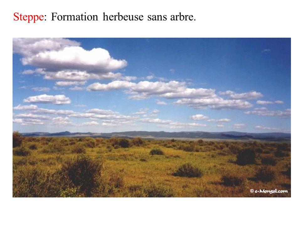 Steppe: Formation herbeuse sans arbre.