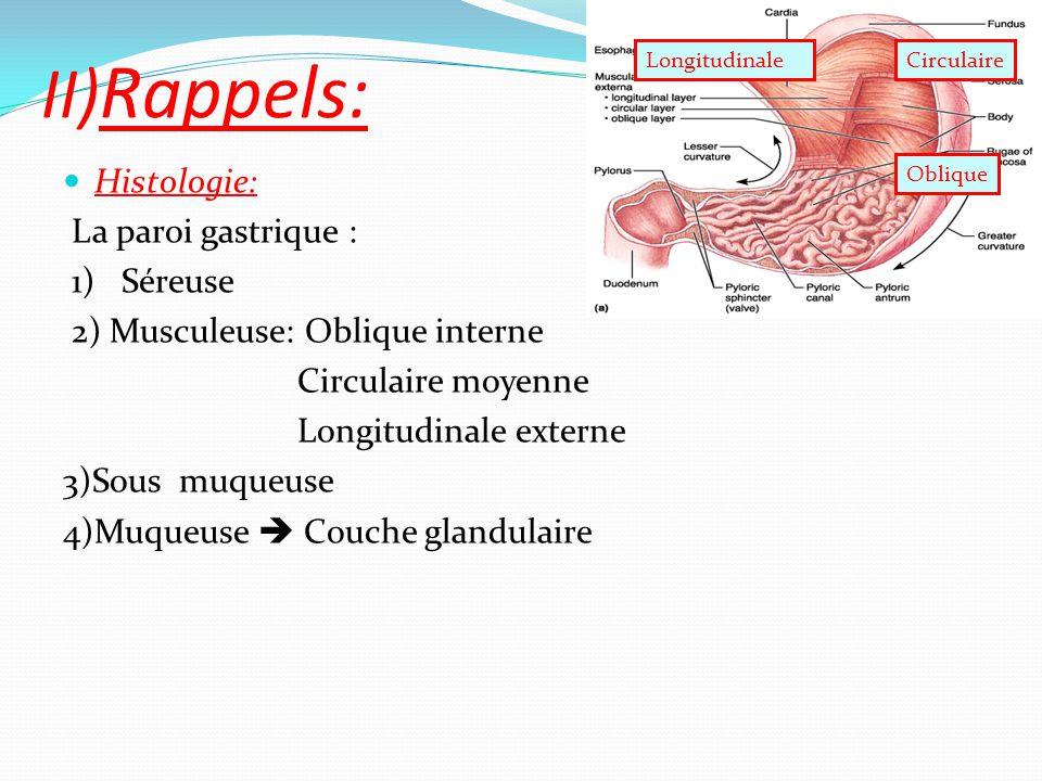 II)Rappels: Histologie: La paroi gastrique : 1) Séreuse