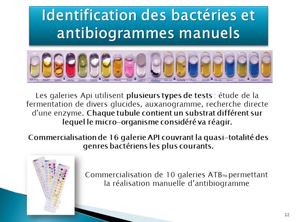 Identification des bactéries et antibiogrammes manuels