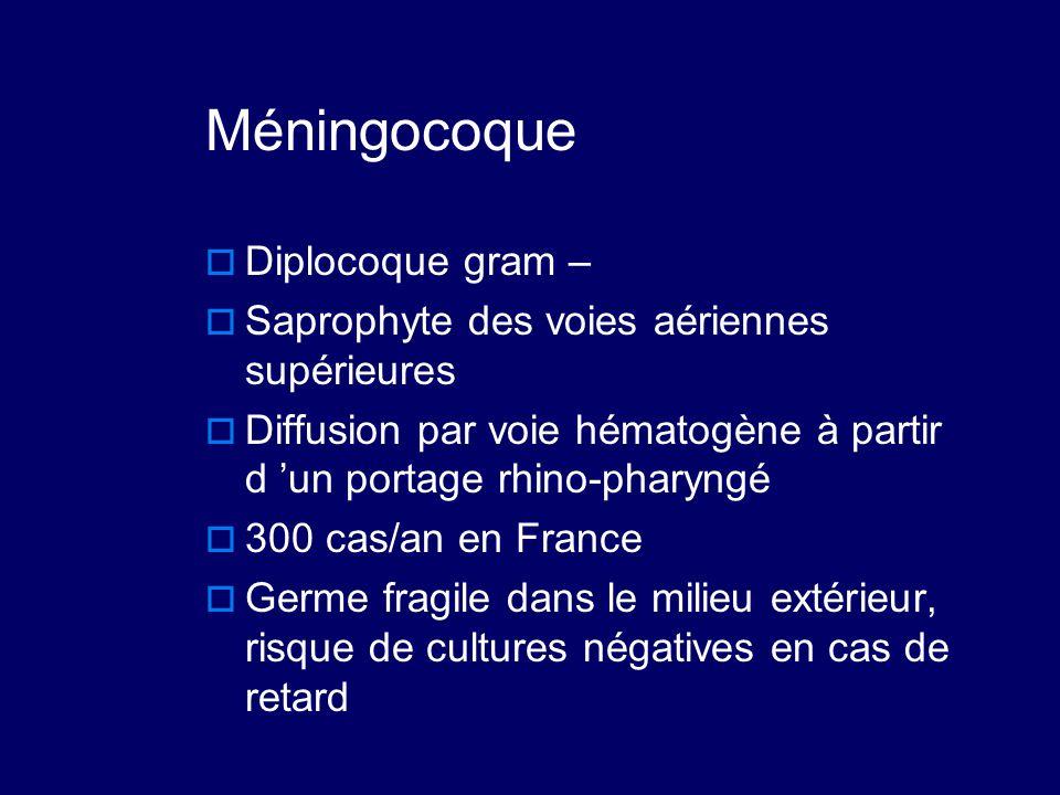 Méningocoque Diplocoque gram –