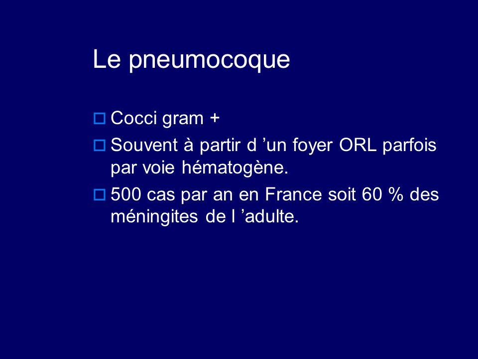Le pneumocoque Cocci gram +