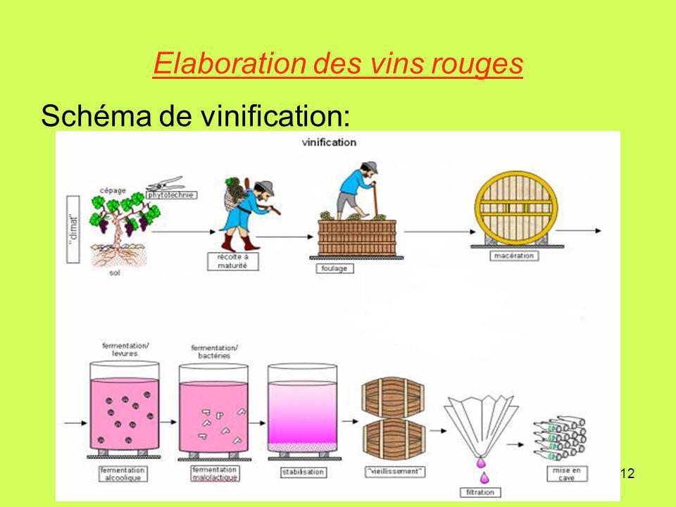 Elaboration des vins rouges