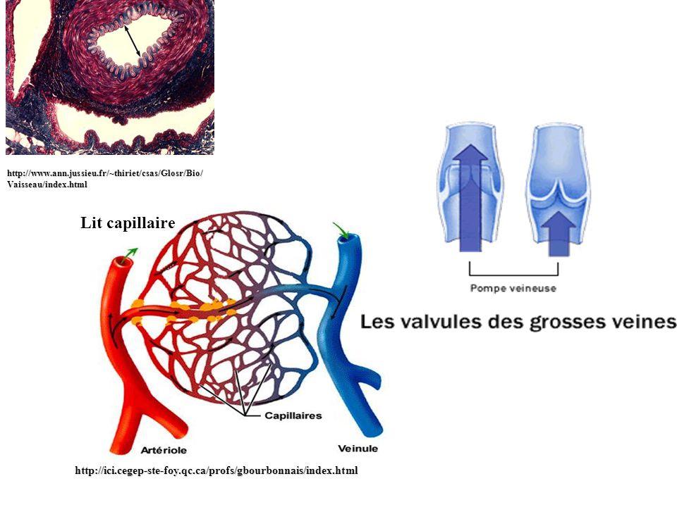 http://www. ann. jussieu. fr/~thiriet/csas/Glosr/Bio/Vaisseau/index