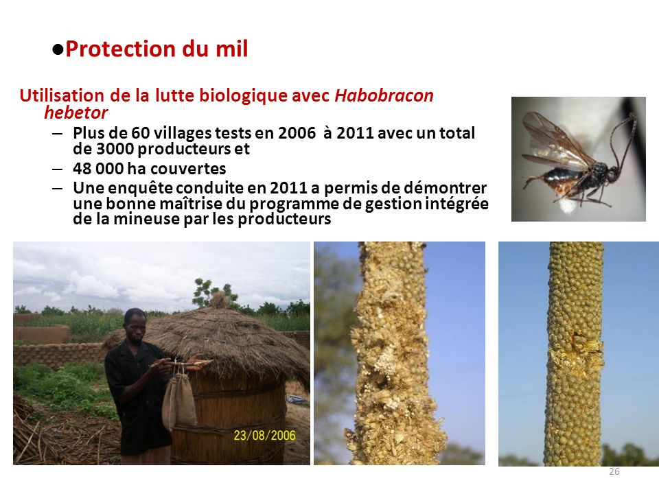 Protection du mil Utilisation de la lutte biologique avec Habobracon hebetor.