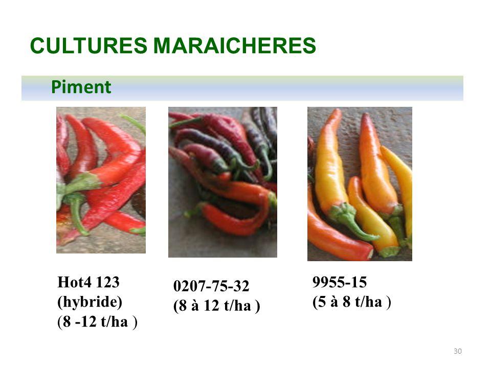 CULTURES MARAICHERES Piment Hot4 123 (hybride) (8 -12 t/ha ) 9955-15
