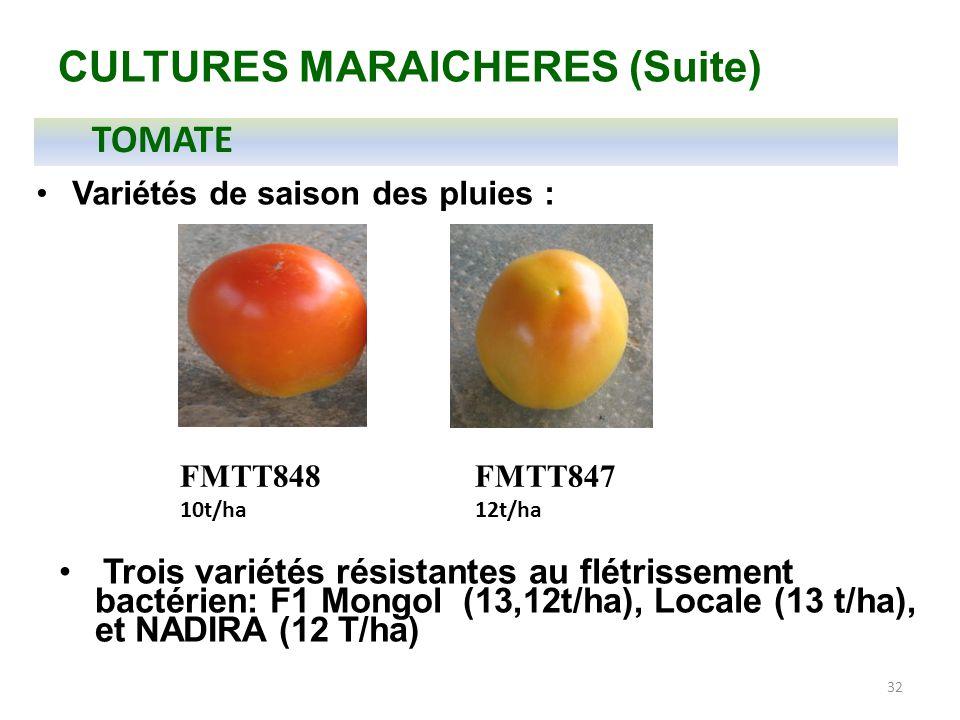 CULTURES MARAICHERES (Suite)