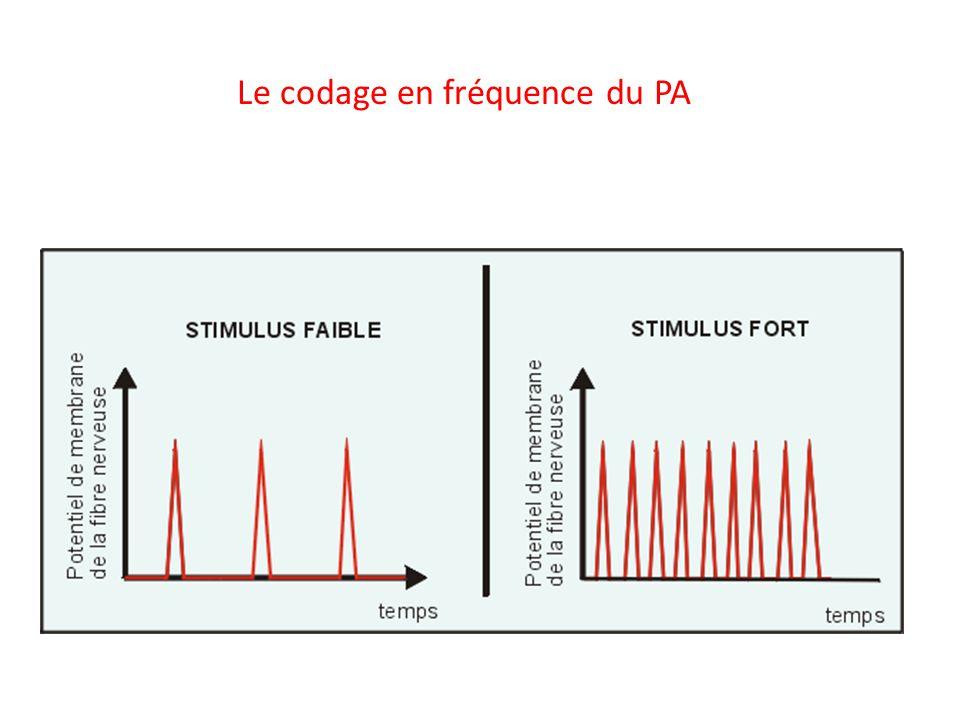 Le codage en fréquence du PA