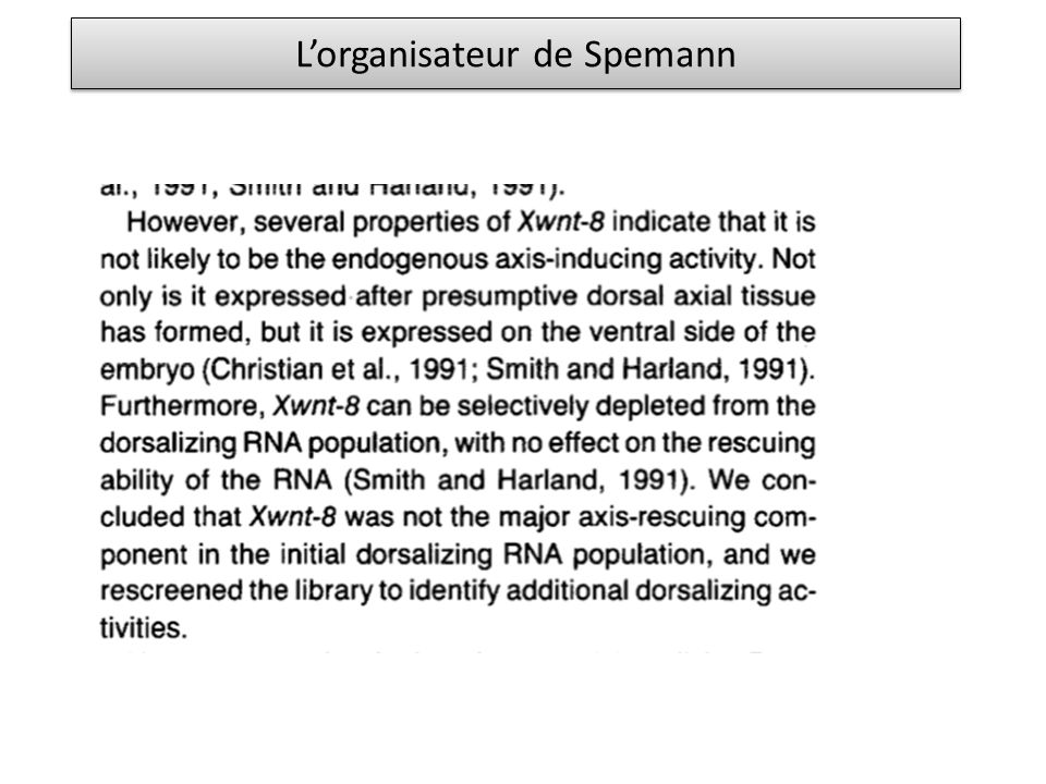 L'organisateur de Spemann