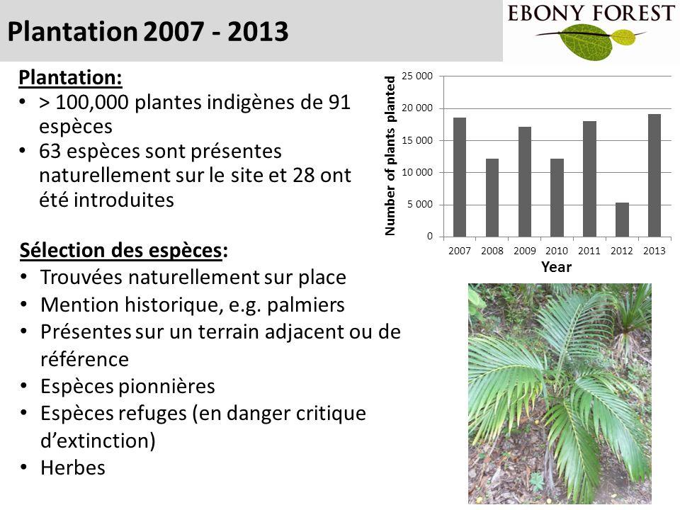 Plantation 2007 - 2013 Plantation: